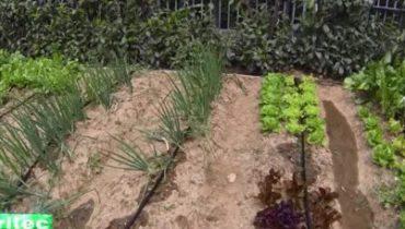 Irrigo Garden Kit